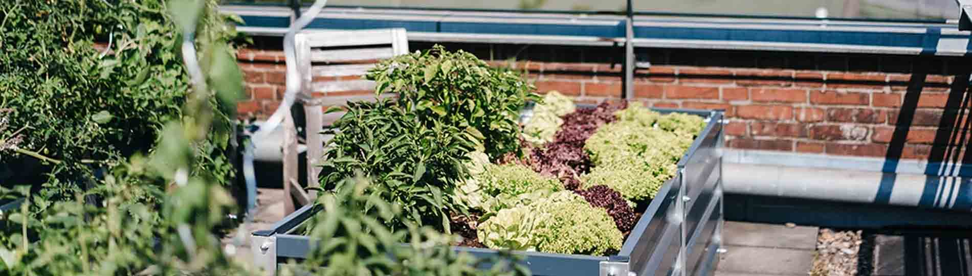 16 Initiatives Changing Urban Agriculture Through Tech and Innovation