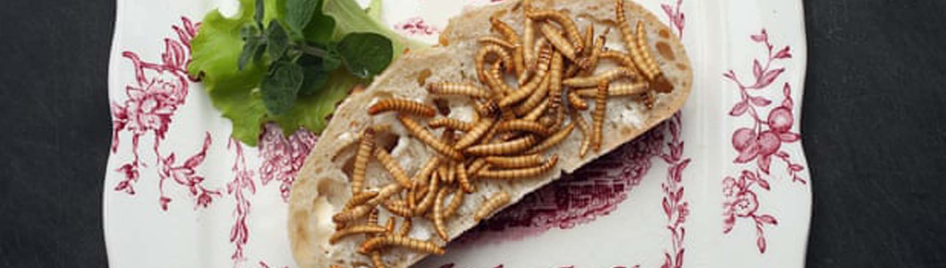 Edible insects set to be approved by EU in 'breakthrough moment'